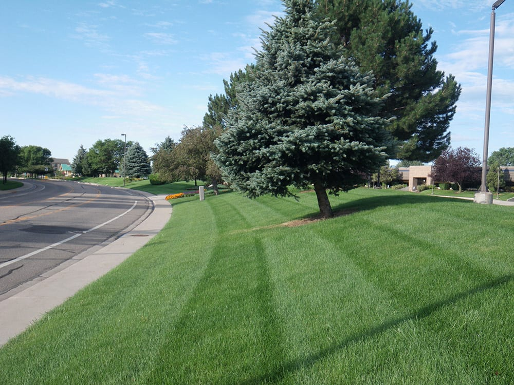 lawn care companies in Denver, CO
