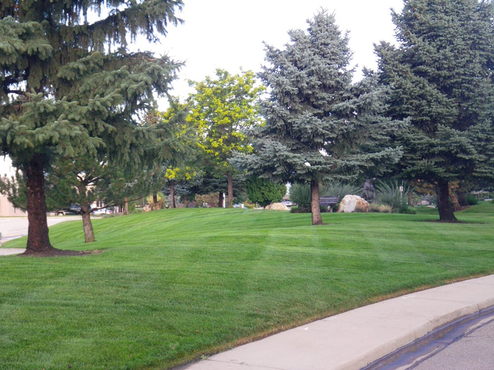 lawn care companies in Denver, Colorado