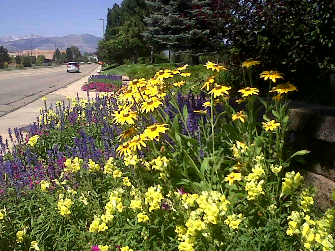 Denver, CO landscape designer
