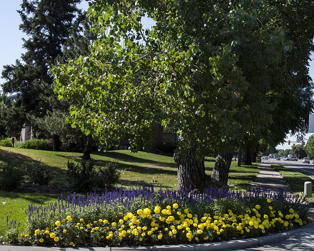Denver, Colorado commercial landscaping