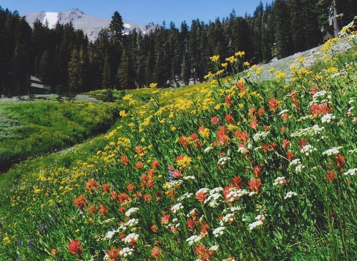 Denver, Colorado Native Landscaping